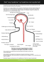 det sympatiska nervsystemet